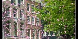 Wethouder Bertien Houwing opent nieuw Roze 50-pluscafé