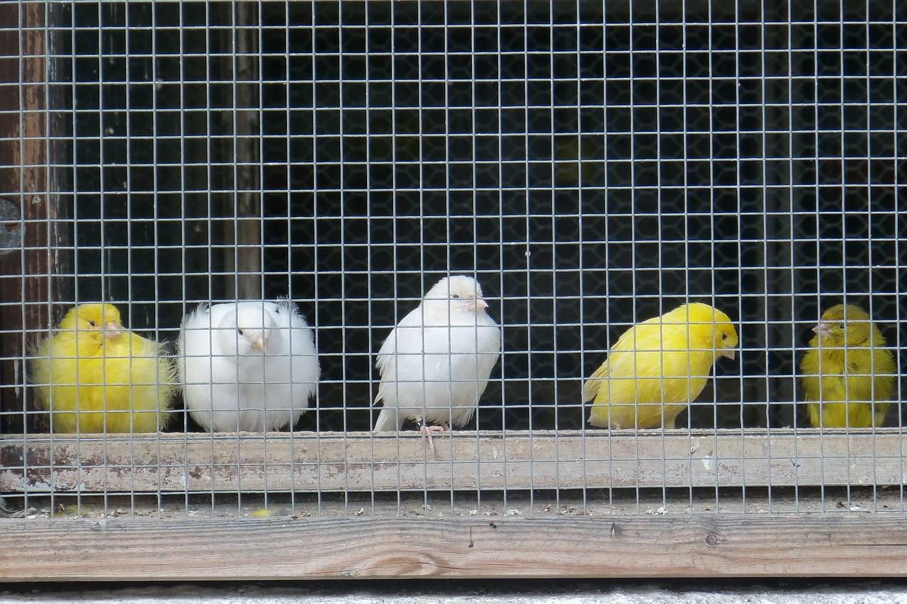 Vogeltentoonstelling